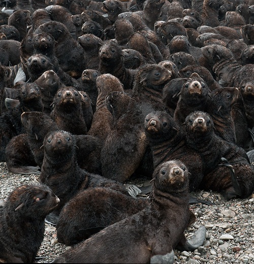 You are not alone. The seals who rejected poor seal pup
