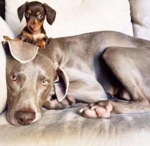 Harlow and Indiana