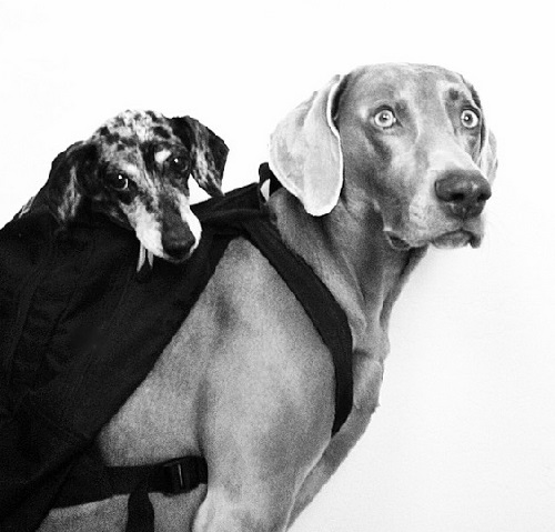 Harlow and Sage