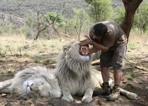 Kevin Richardson the lion whisper