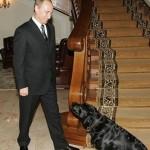 Loyal friend of Vladimir Putin, black Labrador