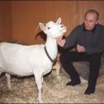 Communicating with white goat, Vladimir Putin