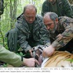 Measuring tiger's teeth and attaching a collar