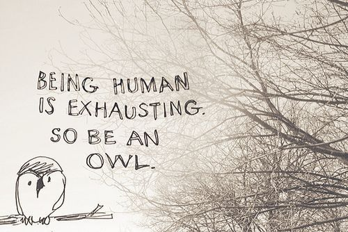 Being human is exhausting, so be an owl