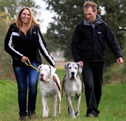 Blind dog Lily