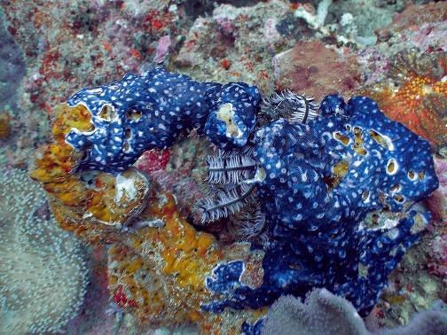 Beautiful alien-like underwater world