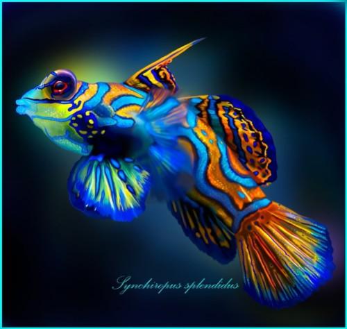 Mandarin Goby. Synchiropus Splendidus. Realistic digital painting by American artist Alice Newberry