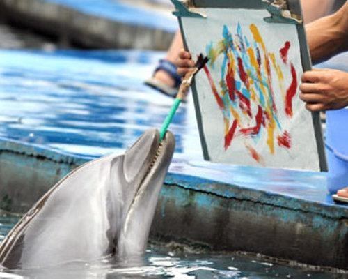 Dolphin from Qinhuangdao, Hebei Province in China
