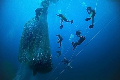 Filipino Pa-aling fisherman at work 40 metres below the South China Sea. Human Planet by Timothy Allen