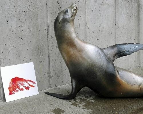 animal artists. Lea the sea lion shows off one her famous flipper prints