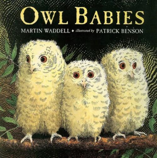 Patrick Benson, Owl Babies. Owl facts