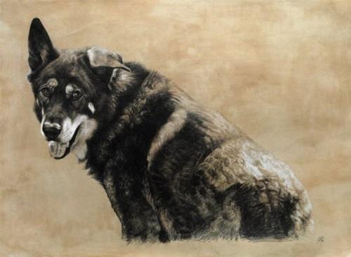 Realistic animal portraits by Cristina Penescu