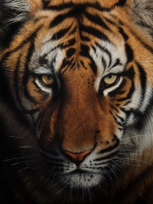 Realistic animal portraits by Romanian self-taught artist Cristina Penescu