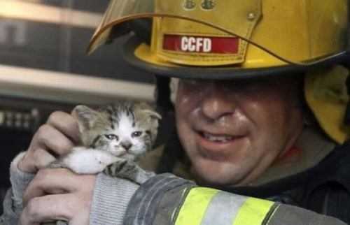Rescued by men animal