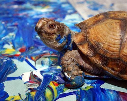animal artists. Turtle Koopa