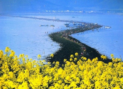 Miracle Island Chindo