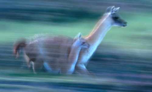 Wild Animals in Motion by Art Wolfe