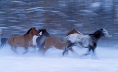 Animals in Motion by Art Wolfe