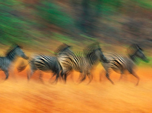 Wild Animals in Motion by American photographer Art Wolfe