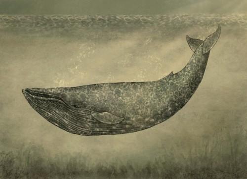 Illustration by Canadian artist Terry Fan