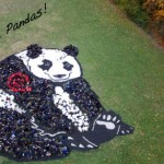 Save the pandas! Painting created with aerial photography by American environmental artist Daniel Dancer