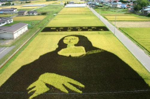 Japanese farmers painting on the rice fields