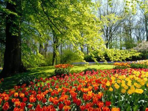 Keukenhof, Netherlands, and is the world's largest flower garden