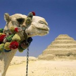 Beautiful animal on the background of a pyramid