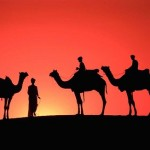 Stunning sunset with camels
