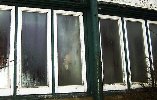 Ghost in the window. Dead owner returns to haunt builders demolishing her beloved guesthouse