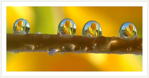 Droplets of water by Russian photographer Dmitry Dolivo-Dobrovolsky