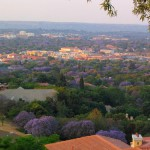 Panoramic view of the city, Jacaranda trees