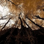 Autumn trees. photographer Gilles Ferrier