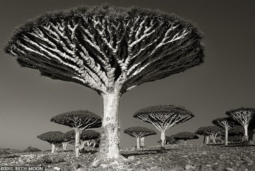 Portraits of the time. Photography by Beth Moon