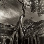 Strangling Trees of Angkor Wat in Cambodia