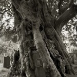 "Fabulous trees in project ""Portraits of the time"". Photography by Beth Moon"