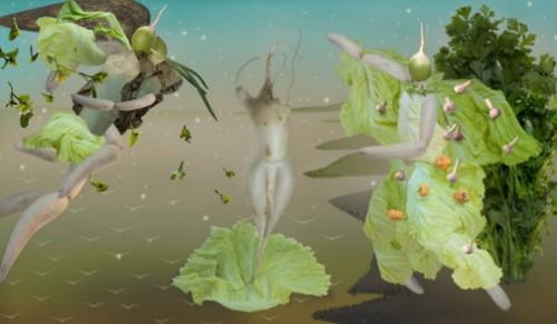 cabbage by Ju Duoqi