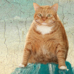 There's much to improve in human life, that's what Fat cat Zarathustra is thinking about