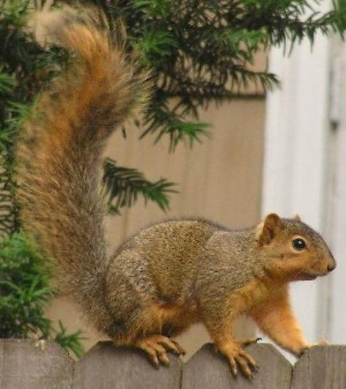 most Intelligent Animals Squirrel