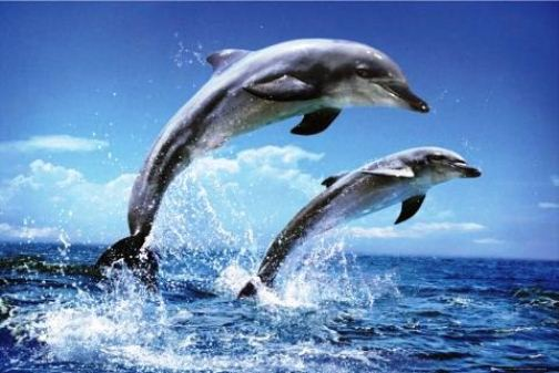most Intelligent Animals Dolphins