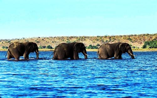 most Intelligent Animals Elephant