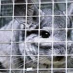 Cruelty toward animals