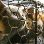 Heart breaking. Encaged cats