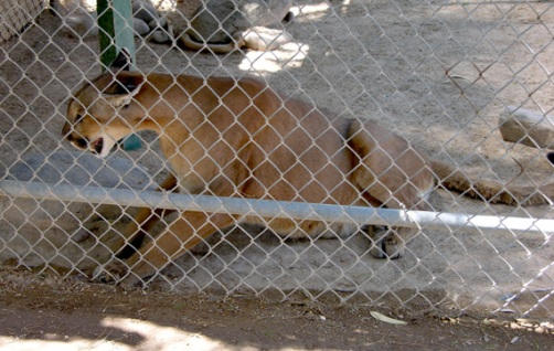"""cruelity towards animals People who hurt animals don't stop with animals there is an established link between cruelty to animals and violence toward humans — regularly referred to as """"the link"""" this link makes it critically important that cruelty toward animals be taken seriously by law enforcement, and by."""