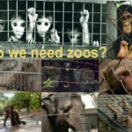 Do we need zoos?