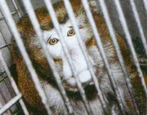 caging animals essay I will be stating my reasons to why i think it is cruel to keep animals in cages my  definition of this topic is: cruel: causing pain or suffering to innocent animals or.