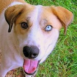 Street dog with different colors of eyes