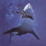 Like humans, sharks are at the top of the food chain