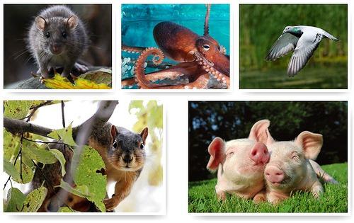 Top-10 most Intelligent Animals