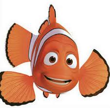 Amazing clown fish